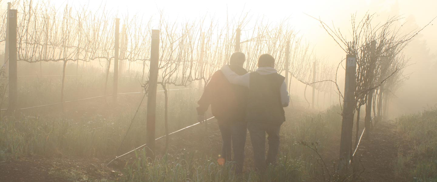 Picture of two people walking between bare vines in the mist by Newton Wines