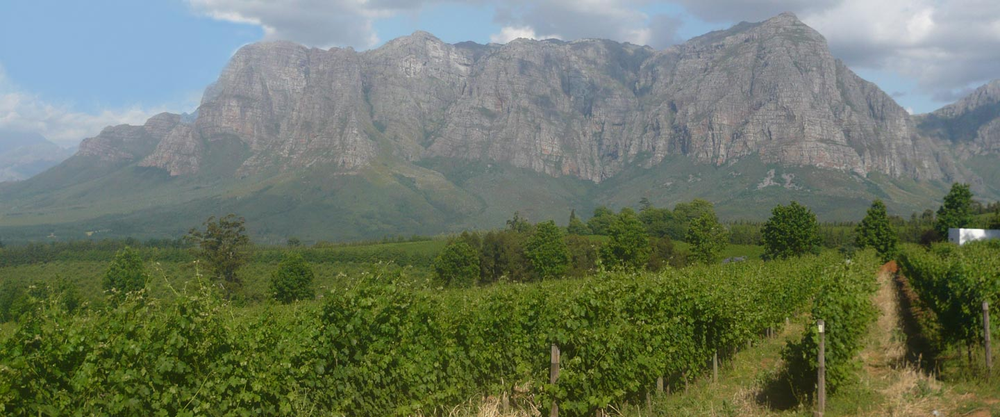 Picture of Table Mountain with vineyards in the foreground