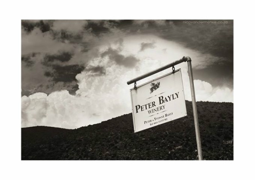 Peter Bayly Vineyard picture